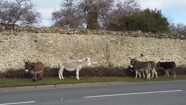 Donkeys roaming in the New Forest