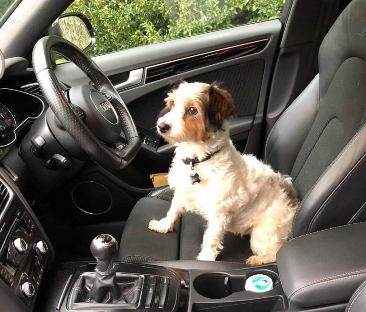 Dog in driving seat of car