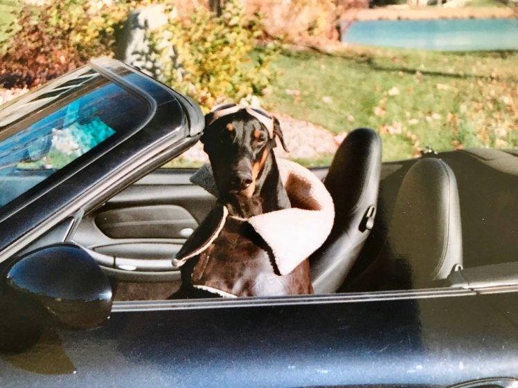Dog in open-top car
