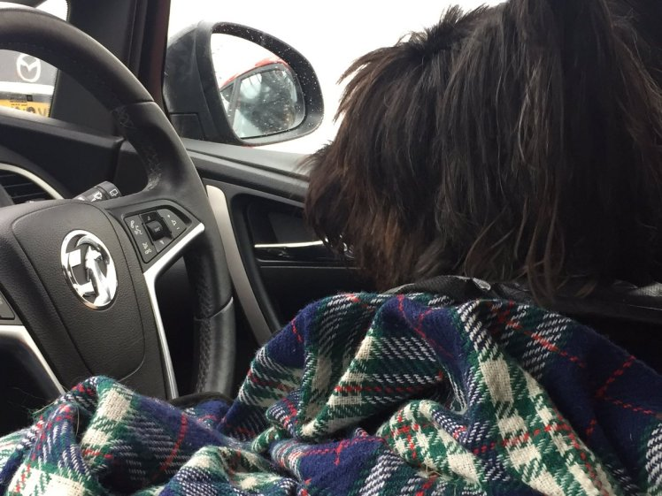 Dog in driving seat