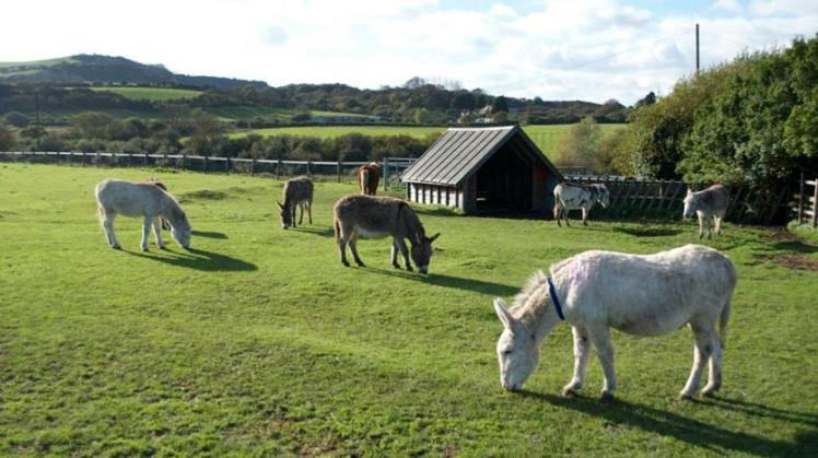 Residents at the Isle of Wight Donkey Sanctuary