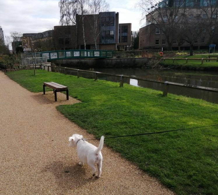 Ernie explores Chelmsford's Central Park