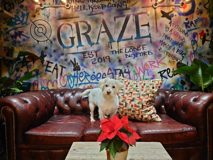 Ernie poses on a leather sofa in the Graze Cafe at The Lodge, Duxford