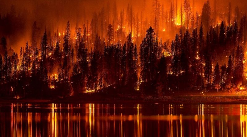 Fire Best Medicine Pandemic COVID Wildfires California