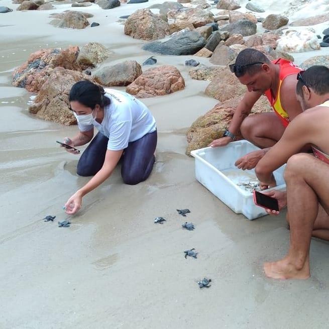 Tartarugas Ponta Negra