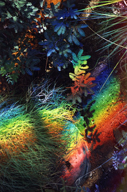 Desert plants painted with Nature's most beautiful rainbow light.