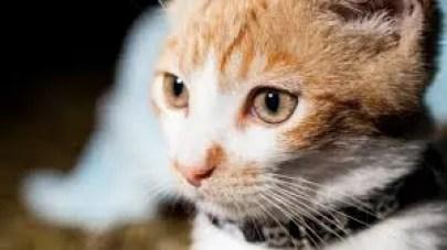 evde kedi köpek tasması nasıl yapılır? tasma malzemeleri nelerdir
