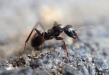 kisah semut dan nabi sulaiman