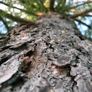 Cascas e troncos