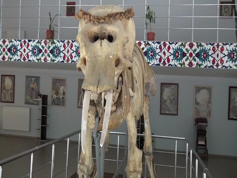 Türkiye'nin canlı ve minarel türleri bu müzede sergileniyor
