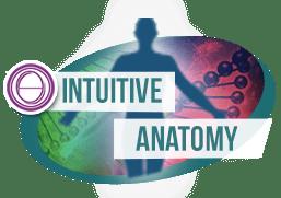 курс интуитивной анатомии