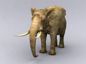 Modelo de elefante de Bellas 3D Model DownloadFree 3D Models Download