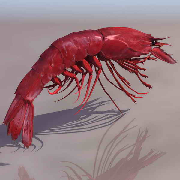 Camarones animales 16 3D Model DownloadFree 3D Models Download