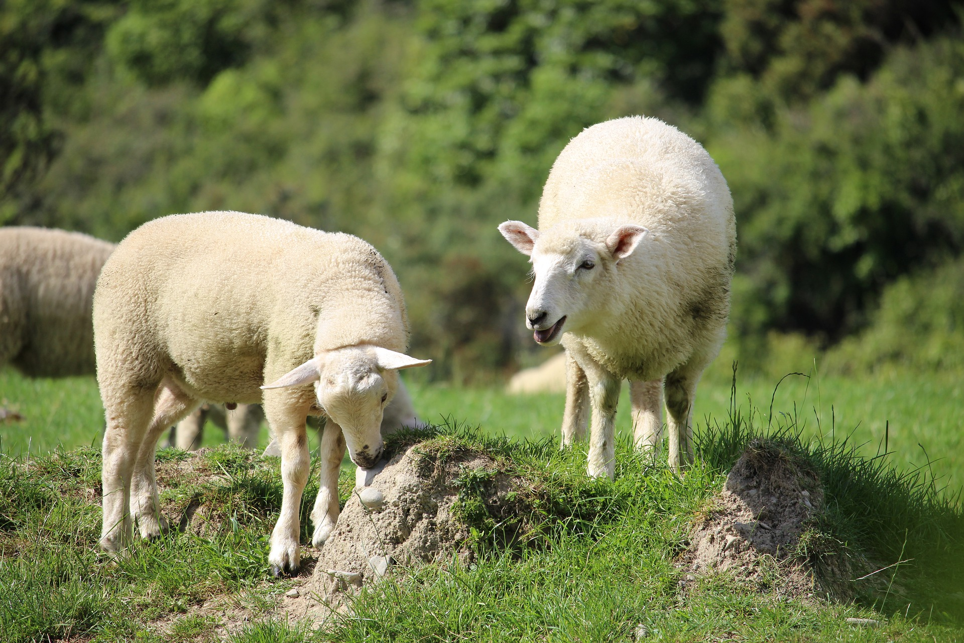 Reformulando «el llamado»: Palabras para iglesias y aspirantes a pastores
