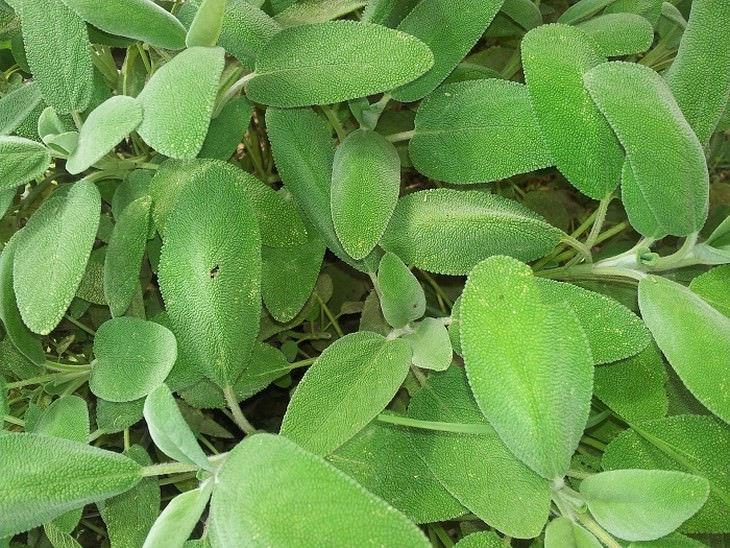 plantas función cerebral