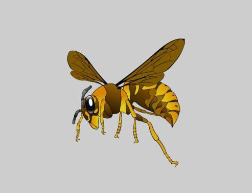 Insectos Que Salvan Vidas