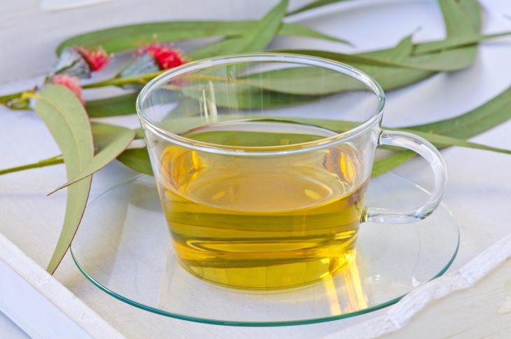 Tés Herbales Especiales Para El Asma y Mejorar La Respiración Té de eucalipto (Eucalyptus globulus)