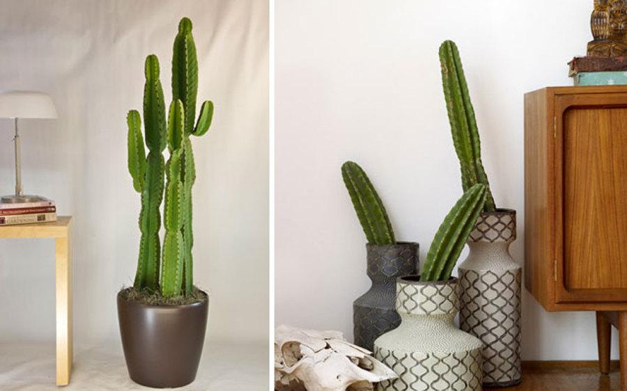 Foto Decorar con Cactus de Anna Gaya 884541  Habitissimo