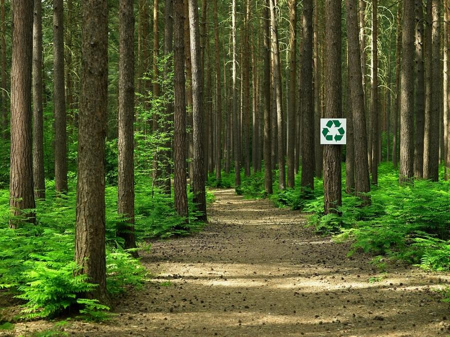 Foto Explotacin Forestal Sostenible de Elenatorrente Daz 943330  Habitissimo
