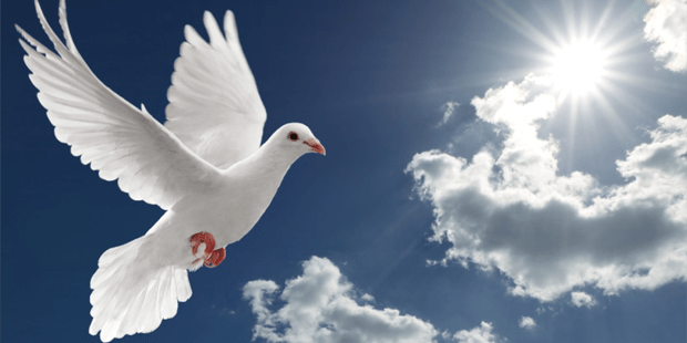 Image result for dove of peace