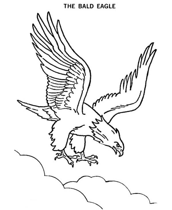 Hawks Coloring Pages