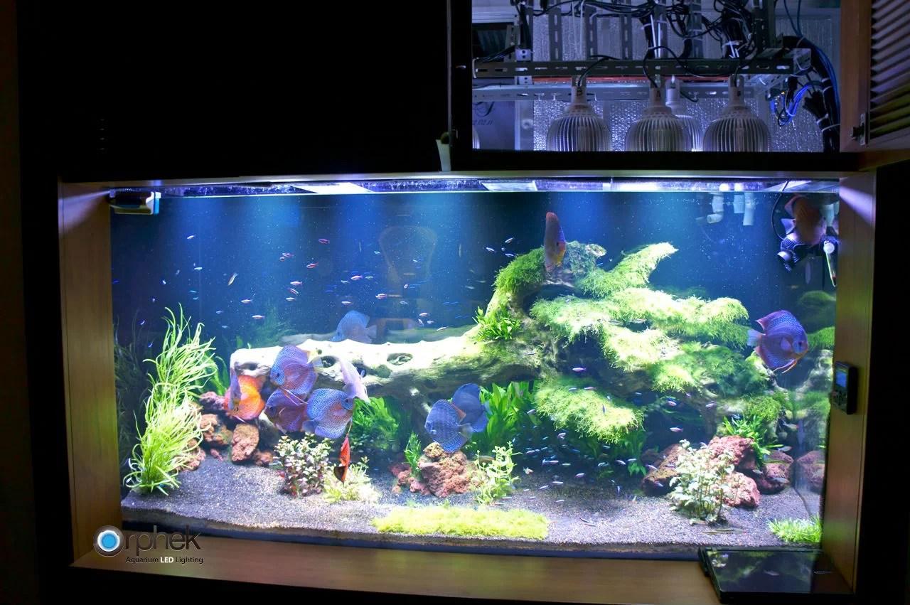 Iluminacin de acuario de agua dulce plantada  Orphek
