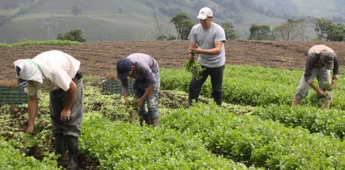 empresas privadas – sector agrario
