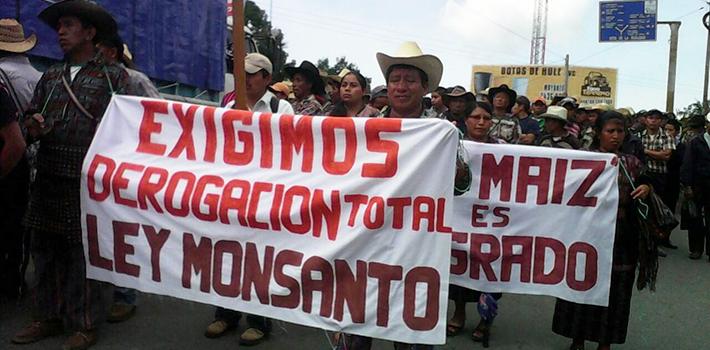 El 1 de septiembre 120.000 guatemaltecos de 82 comunidades indígenas, junto con alcaldes, campesinos y pobladores mostraron su repudio a la Ley Monsanto.