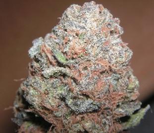 marijuana-uruguay-regulation