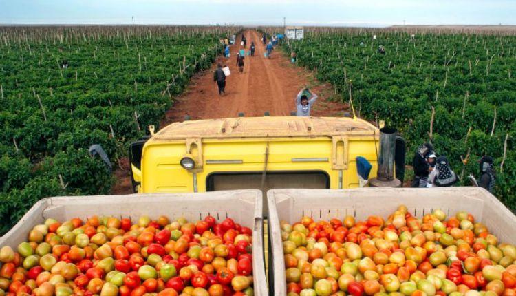 productos-agricolas-mexico