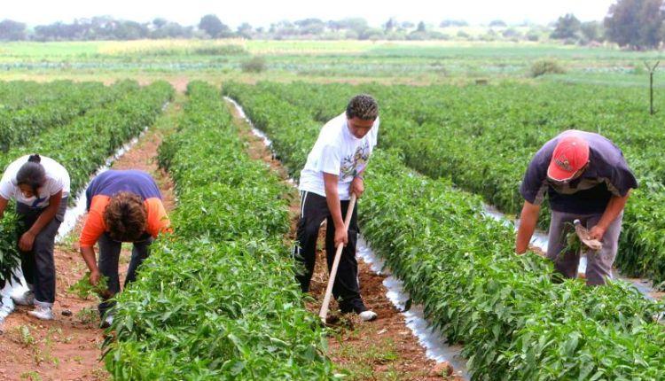 superavit-agroalimentario