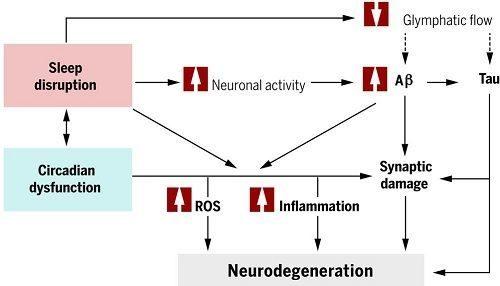 Dormir y Alzheimer
