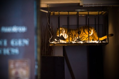 Jaula con tigre.