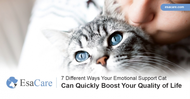 7 Ways Your ESA Cat Can Quickly Boost Your Quality of Life ...