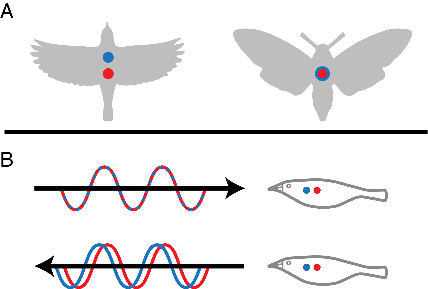 Dual‐polarization radar products for biological