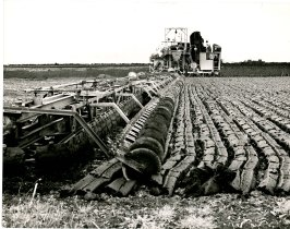 Cutting peat at Clonsast