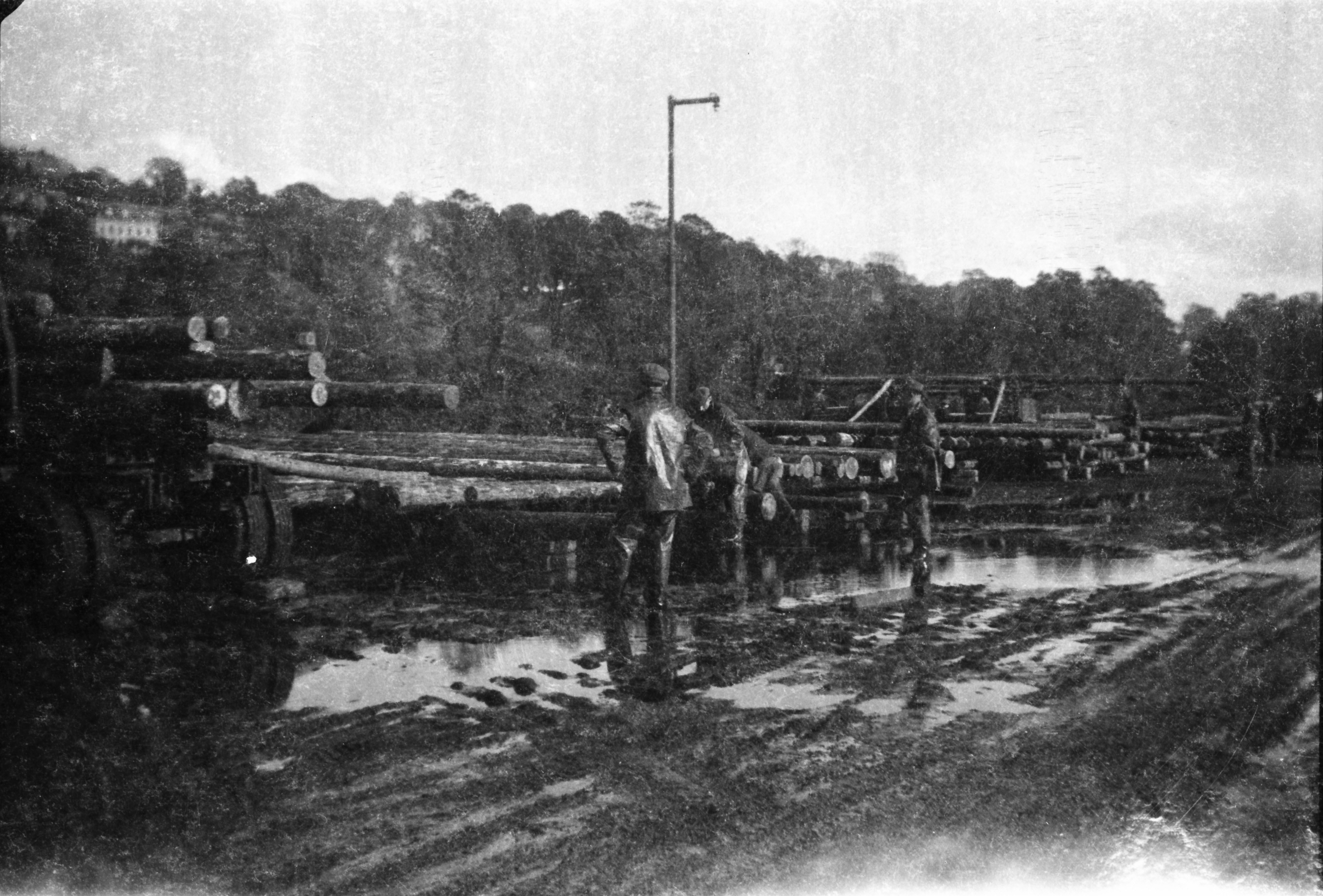 Rural workers in polefield, possibly Cork