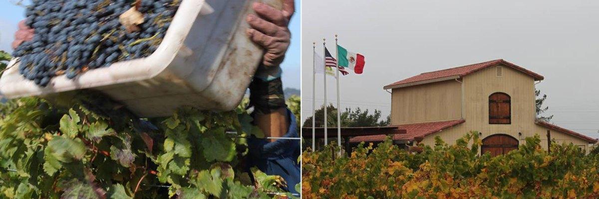 Mexicanos productores vino