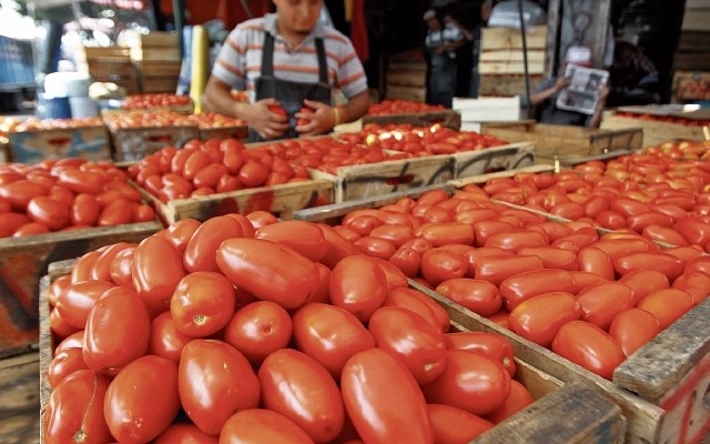 En 15 días los estadounidenses se quedarán sin tomate mexicano