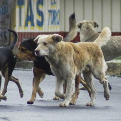 Mexicana crea croqueta para controlar concepción de perros callejeros