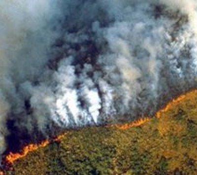 Animales que estarían a punto de desaparecer si se quema el Amazonas