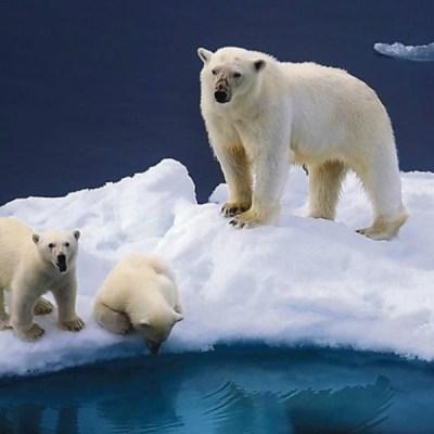 El deshielo, una de las consecuencias del calentamiento global