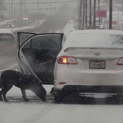 Mujer rescata a perrito de tormenta invernal con unas tortillas