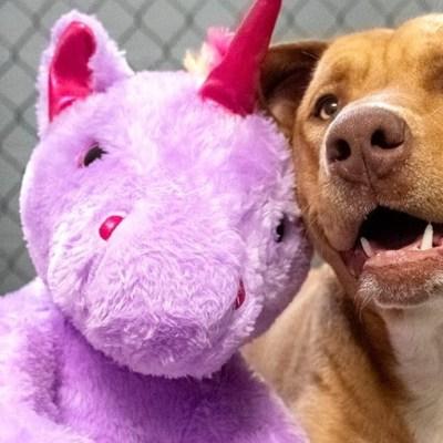 Perrito callejero roba 5 veces un peluche y autoridades se lo compran