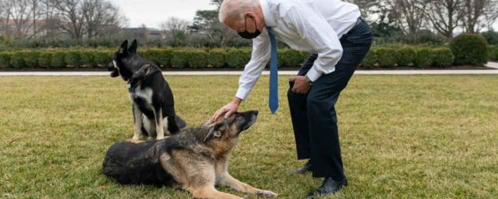 El perro de Biden muerde a otro empleado de la Casa Blanca