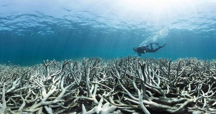 """This undated handout photo released on April 20, 2016 by XL Catlin Seaview Survey shows a diver checking the bleached coral at Heron Island on the Great Barrier Reef. Australia's iconic Great Barrier Reef is suffering its worst coral bleaching ever recorded with 93 percent impacted, scientists said on April 20, 2016 as they revealed the phenomenon was also hitting the other side of the country. / AFP PHOTO / XL CATLIN SEAVIEW SURVEY / STR / -----EDITORS NOTE --- RESTRICTED TO EDITORIAL USE - MANDATORY CREDIT """"AFP PHOTO / XL CATLIN SEAVIEW SURVEY"""" - NO MARKETING - NO ADVERTISING CAMPAIGNS - DISTRIBUTED AS A SERVICE TO CLIENTS - NO ARCHIVES"""