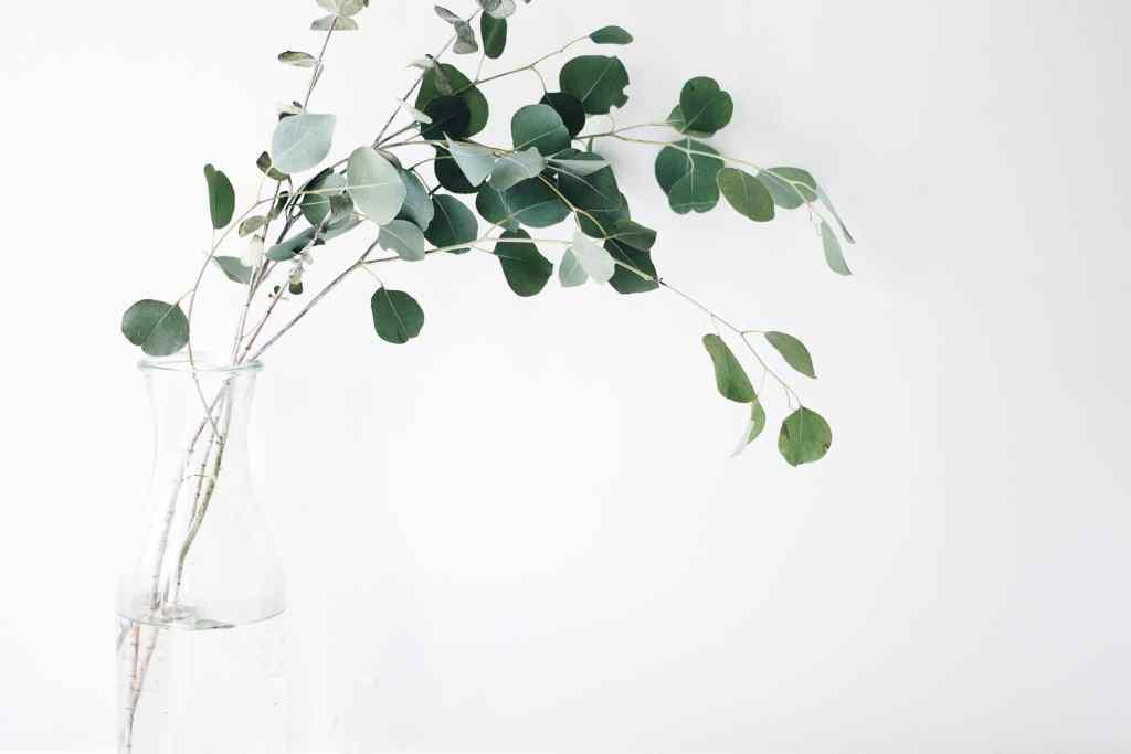 feuille d'arbre verte