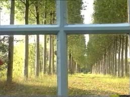 """FIGURA 208 - Quase todos os planos do filme """"Je meurs de vivre"""", de Marcel Hanoun (1994), são filmados através de uma janela que forma uma cruz no centro da imagem"""
