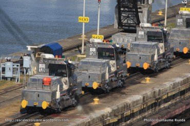 Canal de Panama - Mules Ecluse de Pedro Miguel