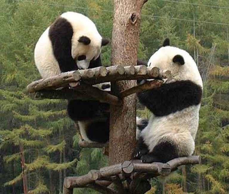 Reserva natural de Wolong en Sichuan